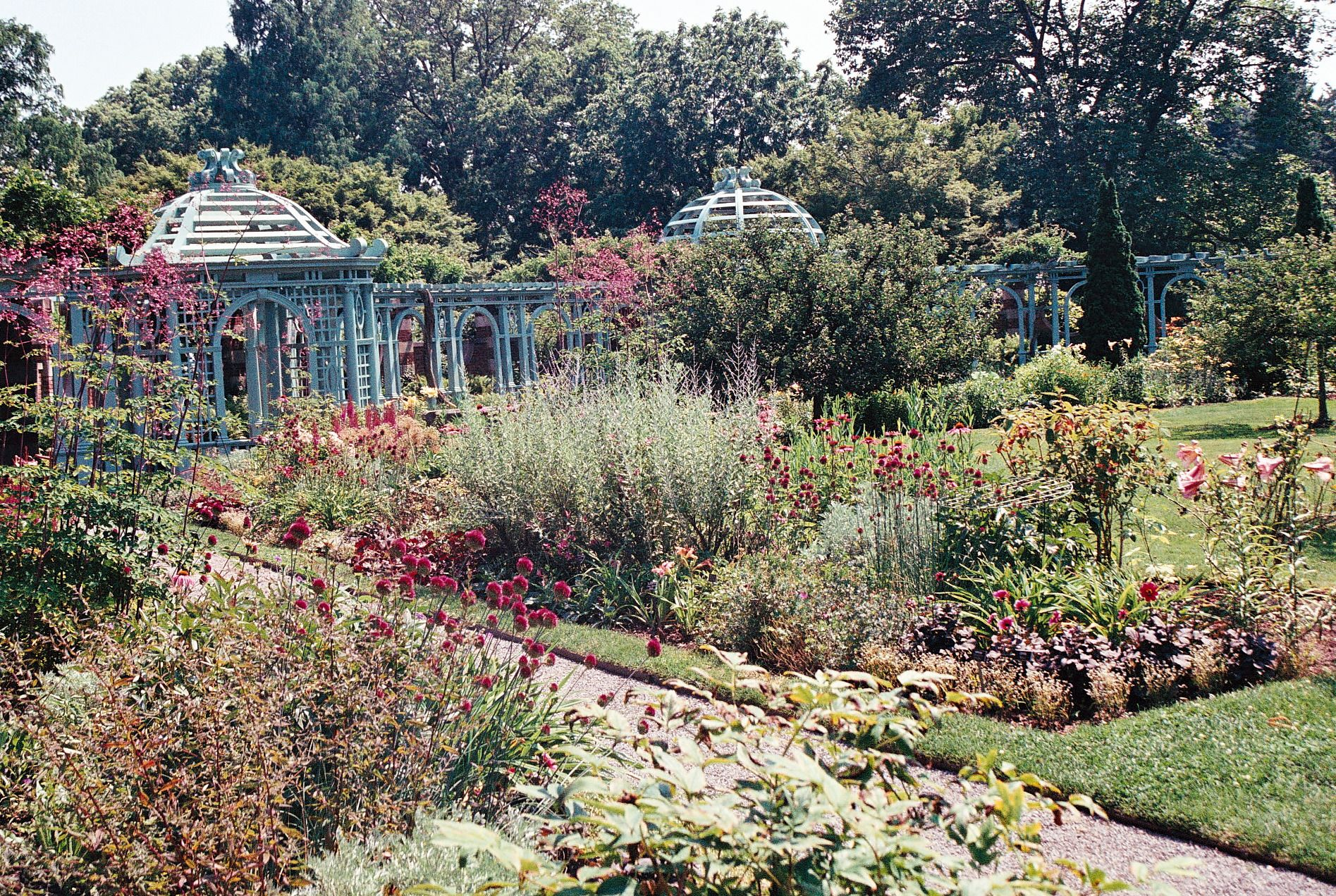 Photo by Julie Farin Walking the Rose Garden Old