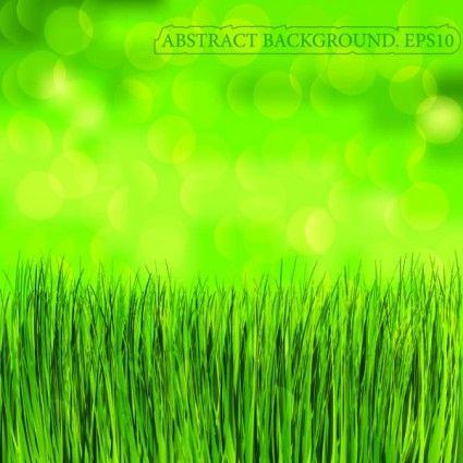 green grass background vector rumput kucing cantik hijau pinterest