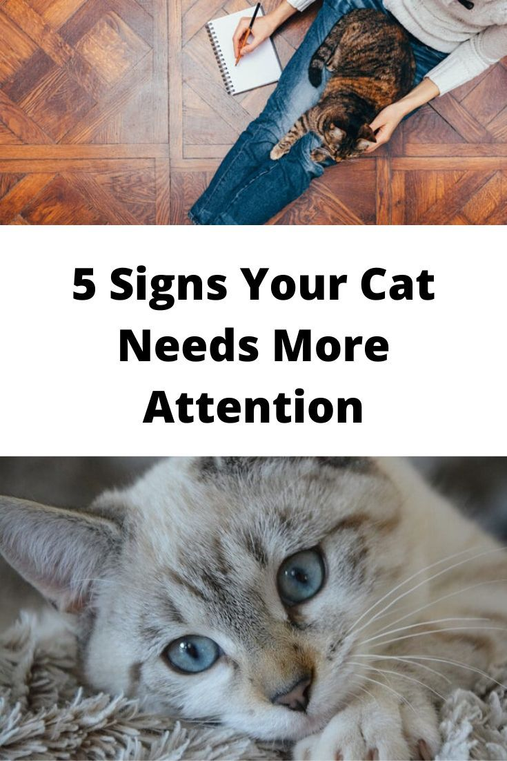 5 Signs Your Cat Needs More Attention #skintreatments