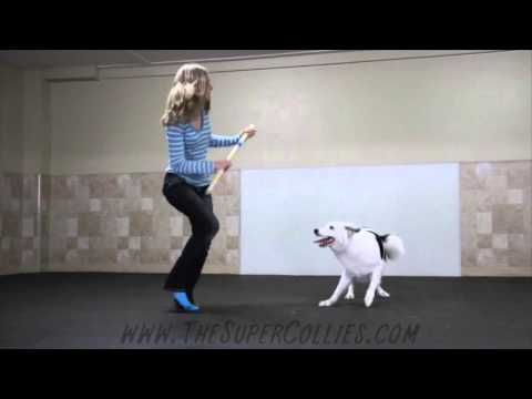 Boogie Shoes Canine Freestyle Routine! : Video Clips From