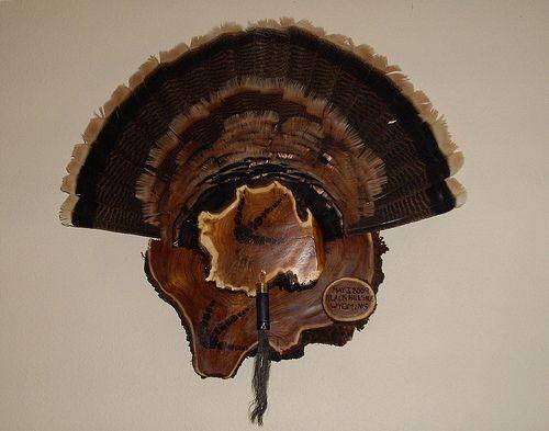 cedar turkey fan mount kit | jpeg mount turkey turkey rio wings fan mount turkey mount dead mount ...