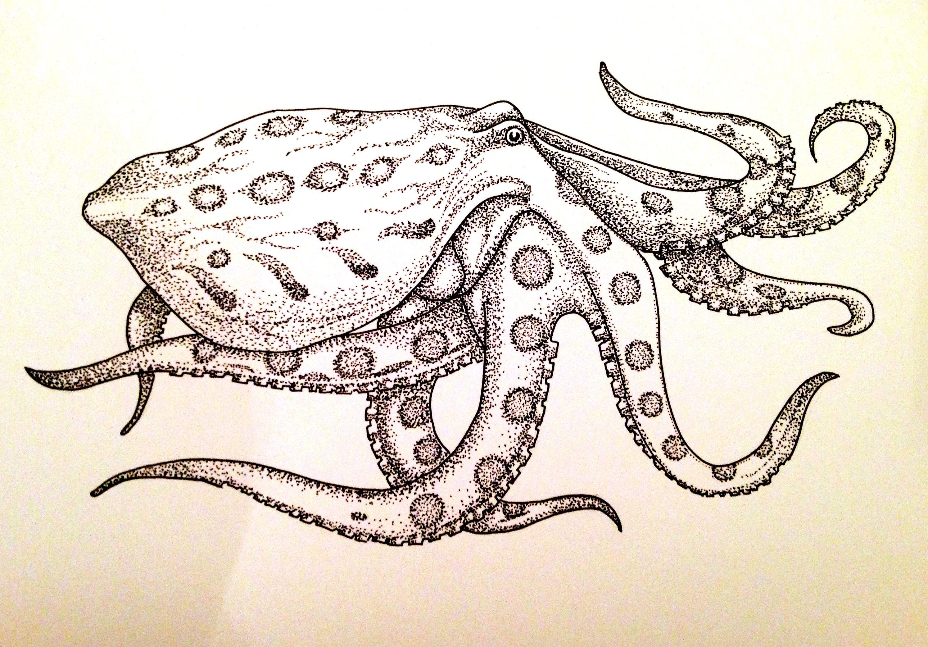 Схема осьминога рисунок