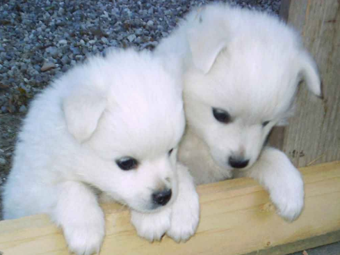 Can Puppies See When Their Eyes Open Cute Husky Puppies Cute Puppies Images Puppies