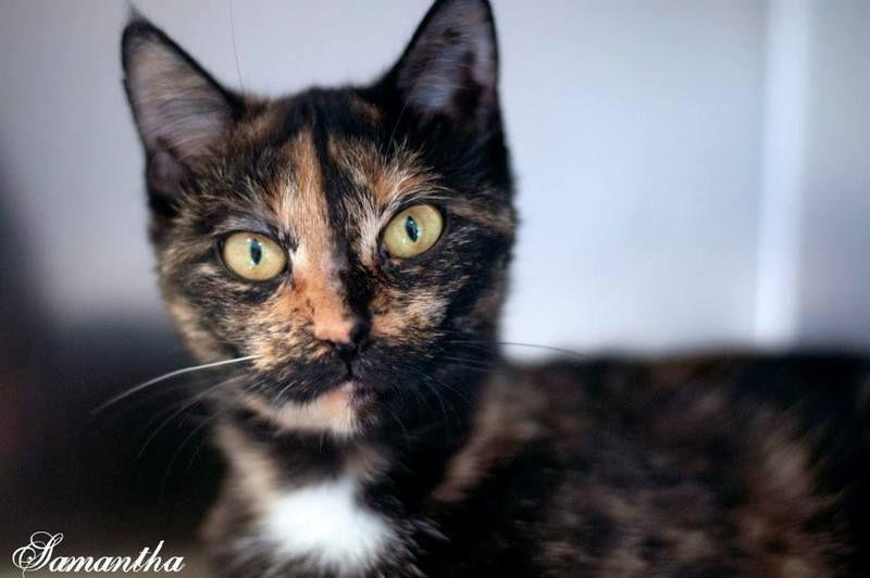 Adopt Samantha on Adoption, Pets, Animals