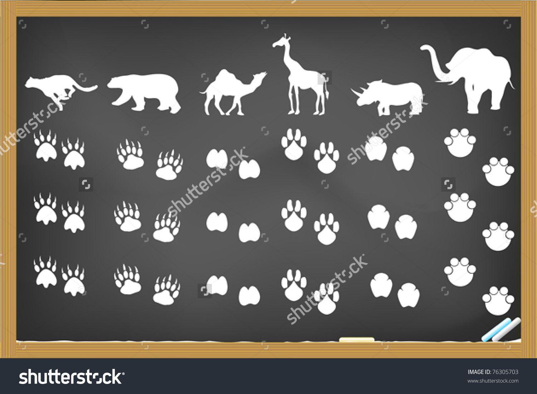 Stock Vector Some Animals Footprints Drawing On Blackboard