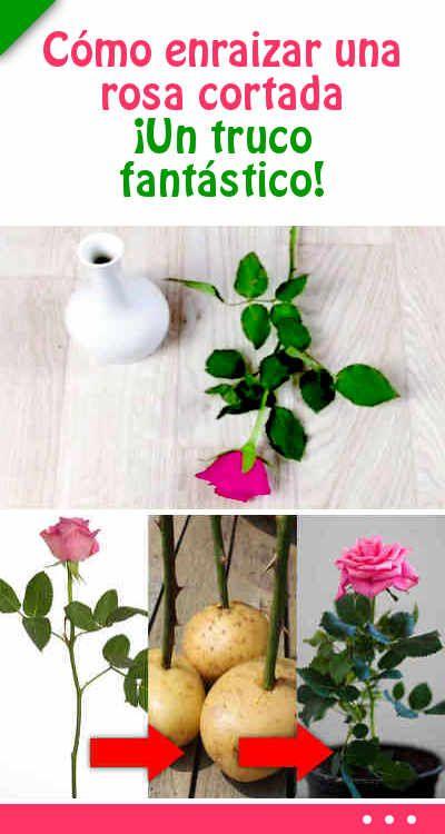 Como Sembrar Flores
