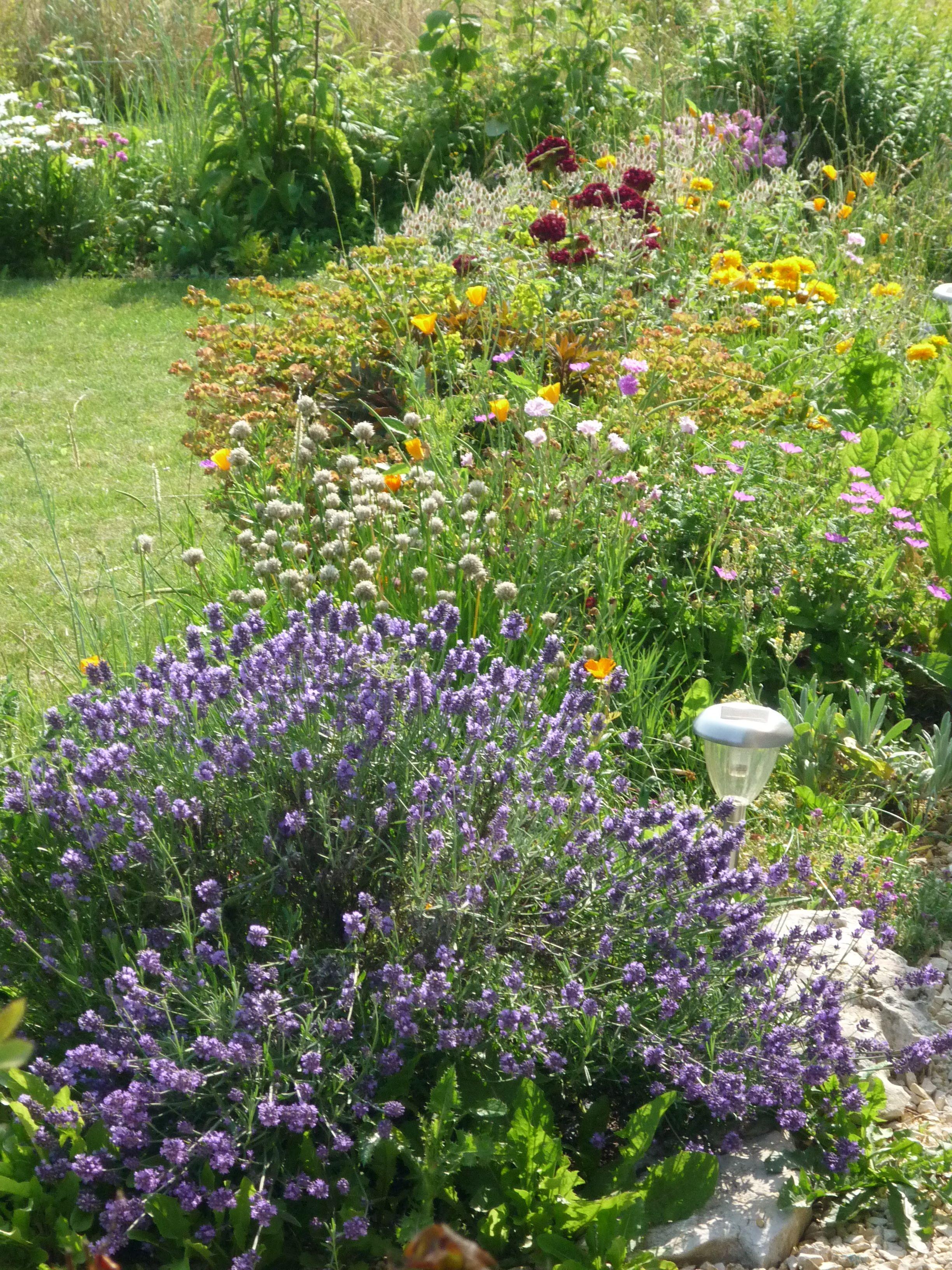 massif de juillet   Mon jardin au fil des saisons   Pinterest ...