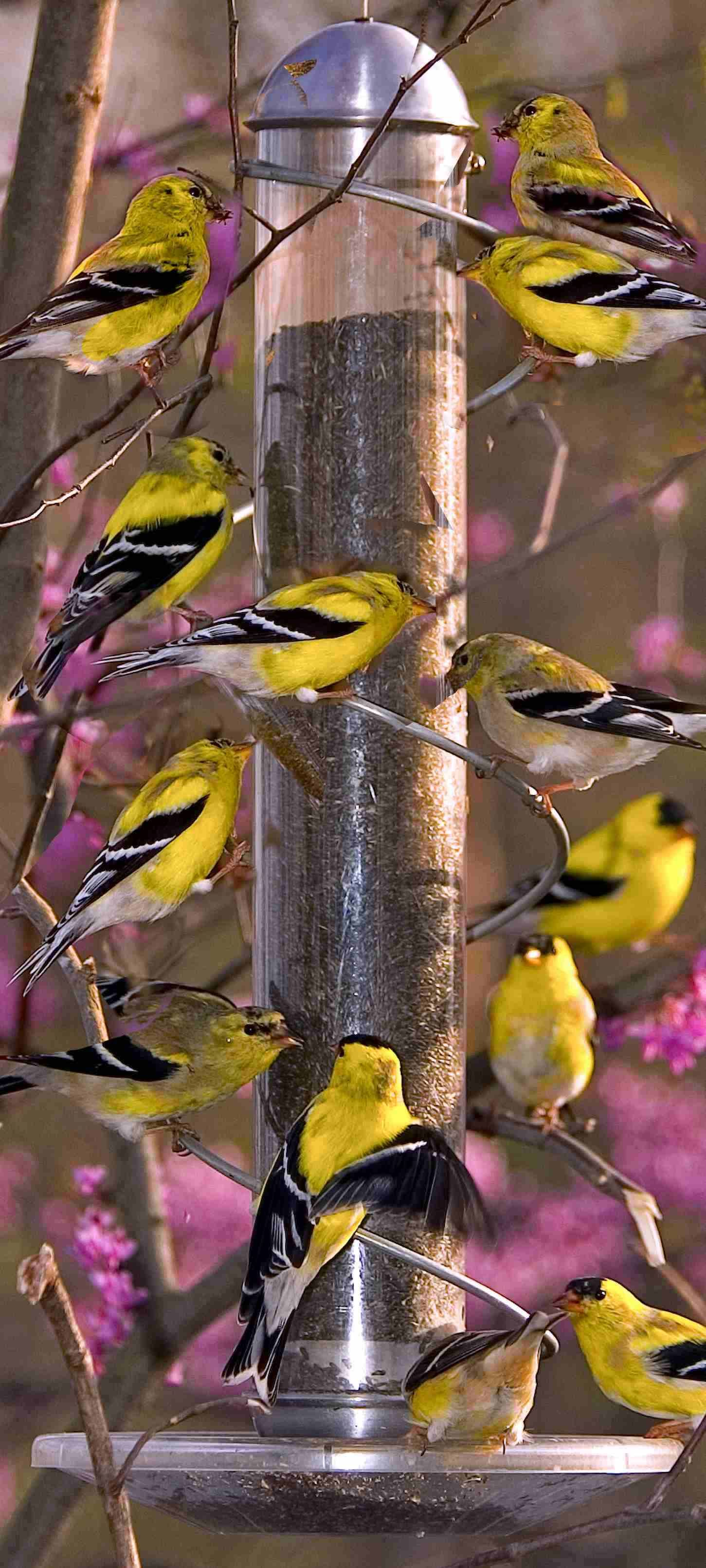 17 In Metal Spiral Finch Tube Feeder Finch Feeders Birds Bird Feeders