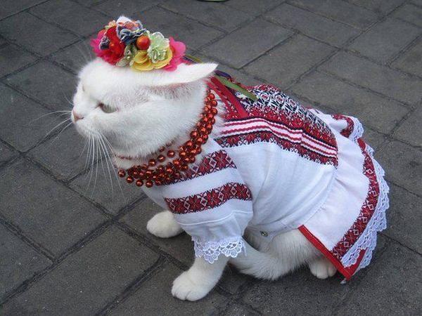 Sava On Twitter Cat Holidays I Love Cats Cute Animals