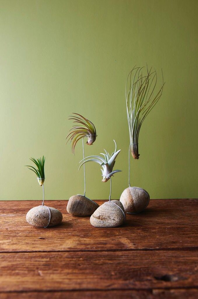 air plant holder picture only plants pinterest pflanzen garten und deko. Black Bedroom Furniture Sets. Home Design Ideas
