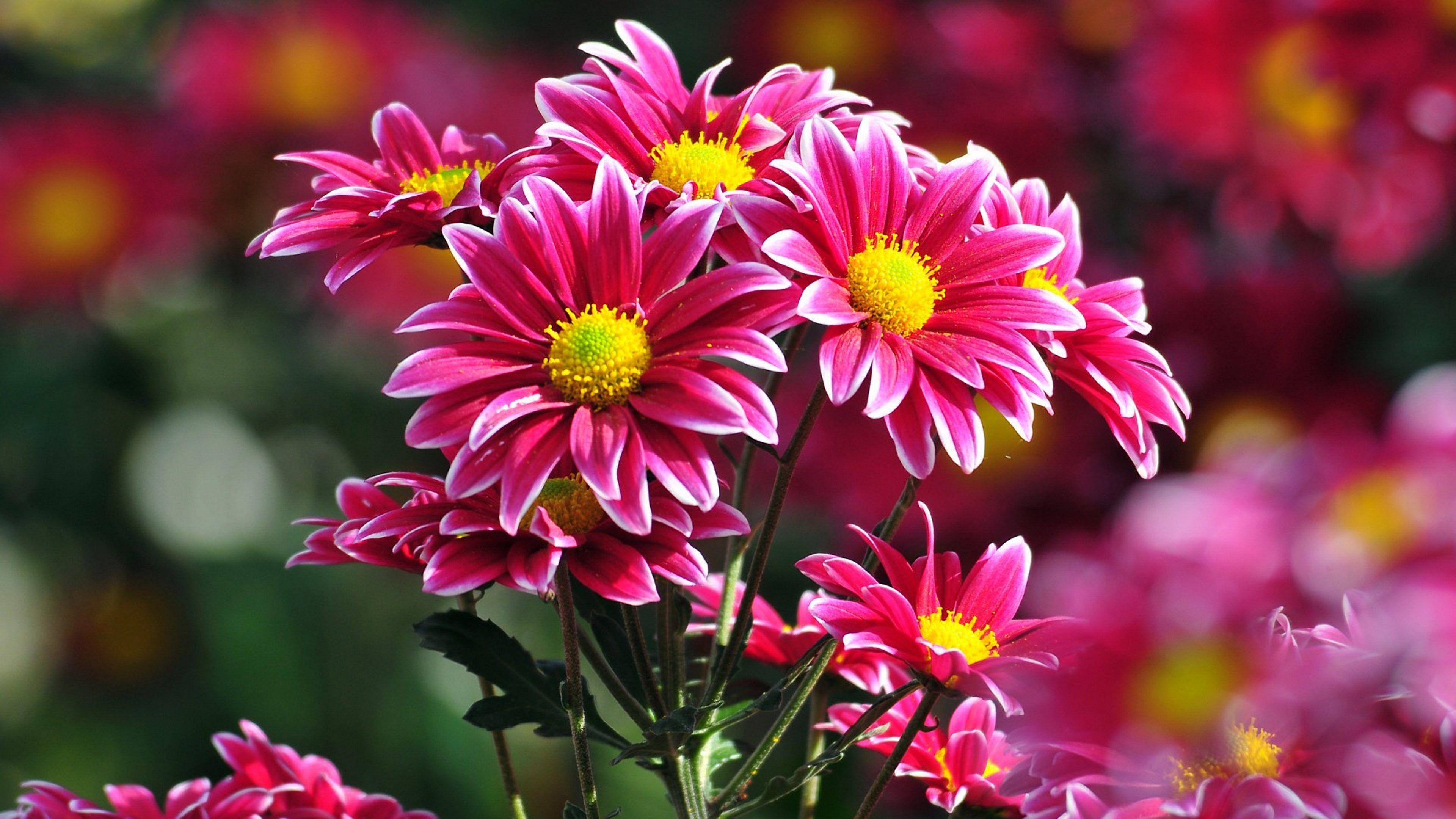 4k Pc Wallpaper Download 3840x2160 Beautiful Flowers Pictures Flower Pictures Flower Desktop Wallpaper