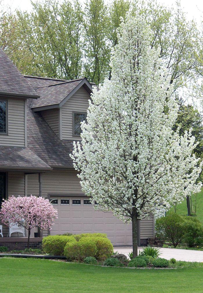 df61c533918548b9045f39c304443397 - Tall Skinny Trees For Small Gardens