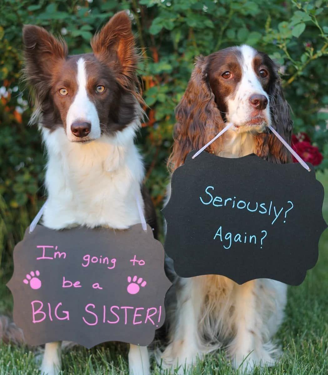 new puppy announcement ideas
