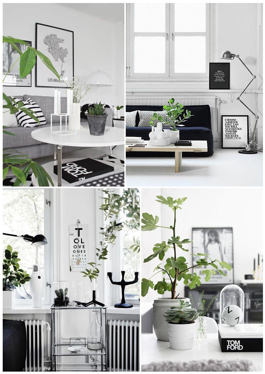wohnen schwarz wei mit pflanzen zuhause wohnzimmer pinterest nat rliches holz konzept. Black Bedroom Furniture Sets. Home Design Ideas