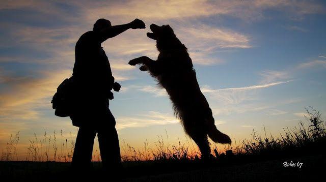 Человек и Собака - целый Мир   Animal companions, Animal ...