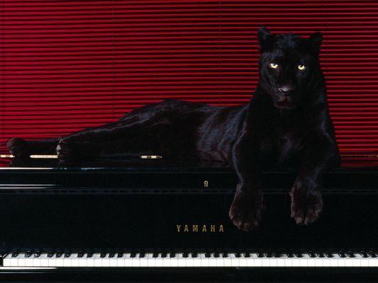 fekete macska - Google Search