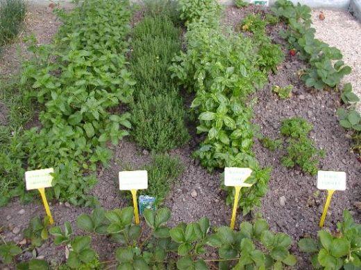 how to grow a herb garden. How To Grow A Herb Garden L