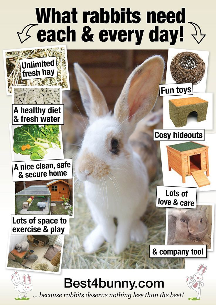 What rabbits need each & every day! http//www.best4bunny