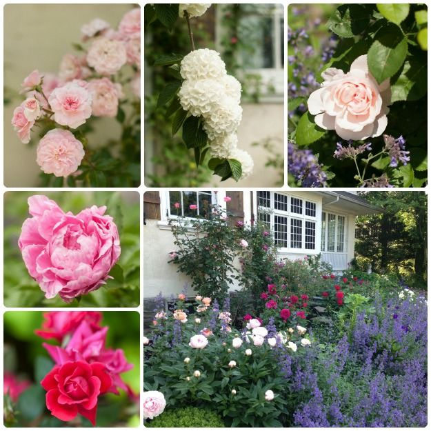 Pennsylvania Rose Garden From Garden Design Reader Casey Wows With