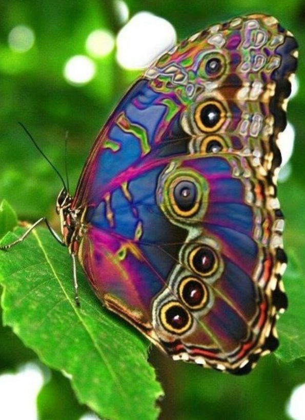 Colourful butterfly | Peacock butterfly, Beautiful butterflies ...