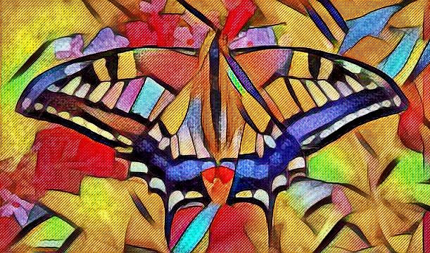 Butterflies Morphing. Page: https://drakre52.jimdo.com/fauna/ Music: Karpa. Morphing: Drakre52 film: https://vimeo.com/125225893