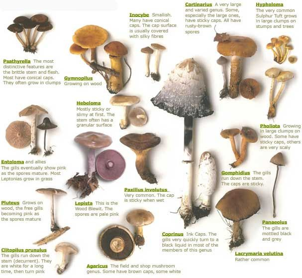 Mushroom identification guide mushroomexam online also rh pinterest