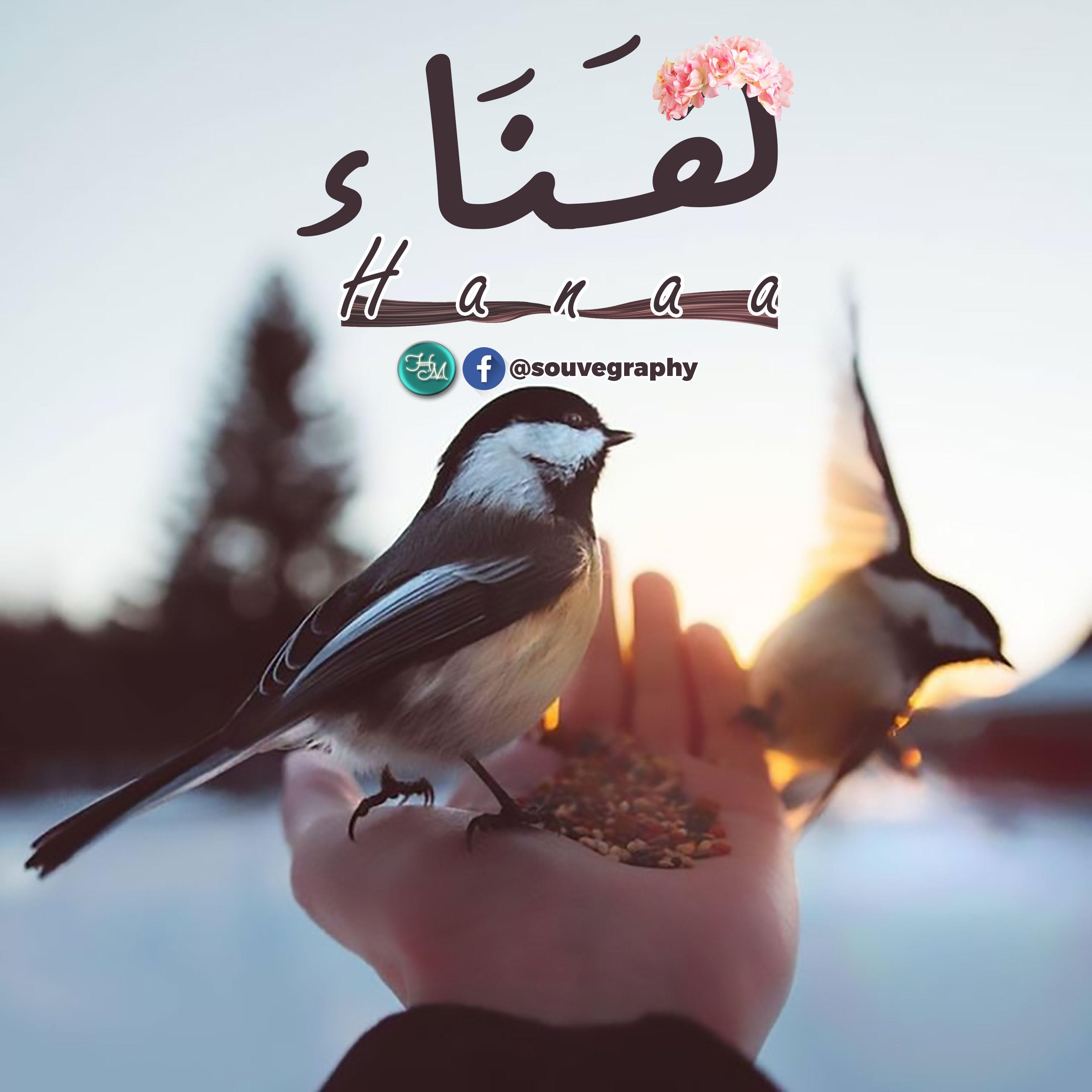ه ن اء اسم علم مؤنث عربي معناه السرور و الفرح و الم سر ة و السعادة هناء Hanaa A N A Letters Animals