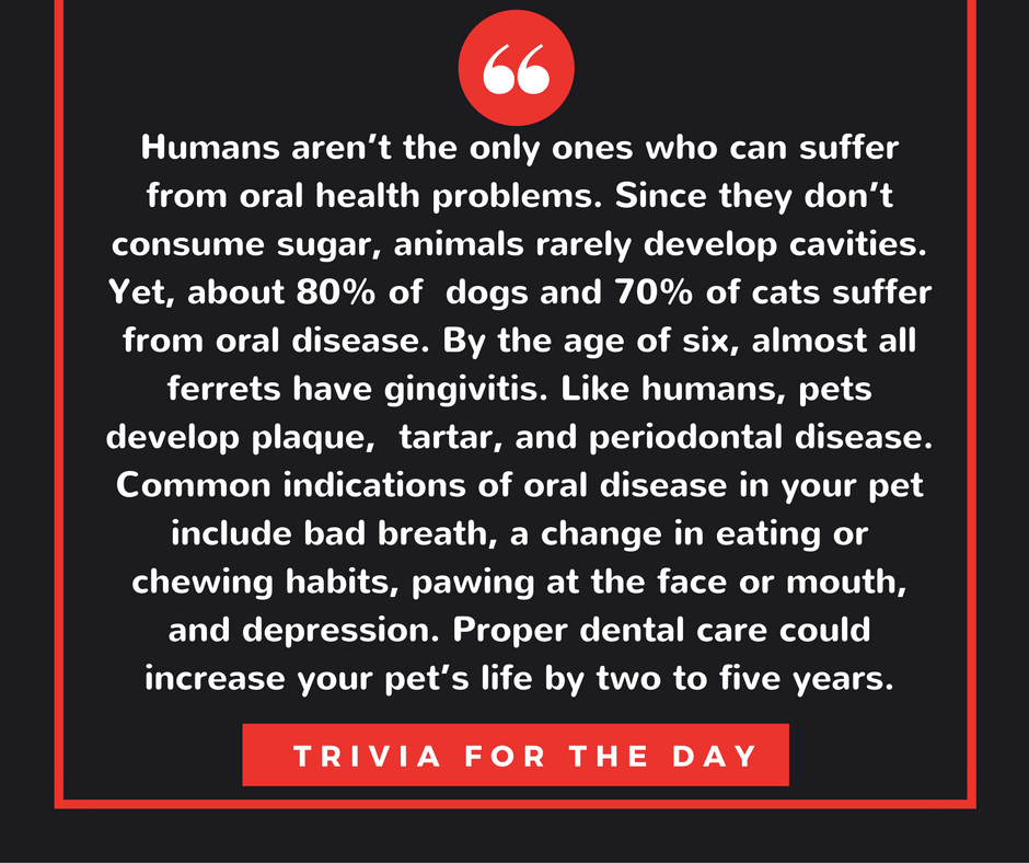 Our daily trivia brought to you by Orthofill. Visit https://www.orthofill.com/  #teethbandsforgaps #orthofill