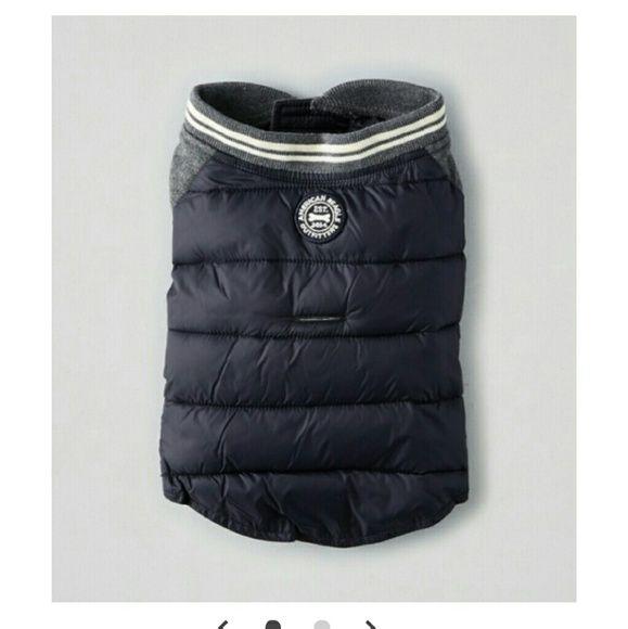 American Eagle Outfitters Jackets & Coats   Men American ...  Dog Jacket American Eagle Outfitters