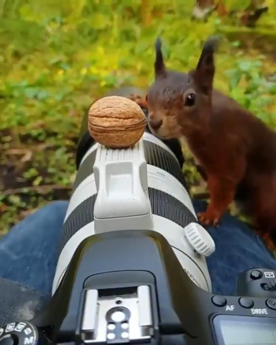 Slow motion of a squirell taking that nut you just offered him. �️�