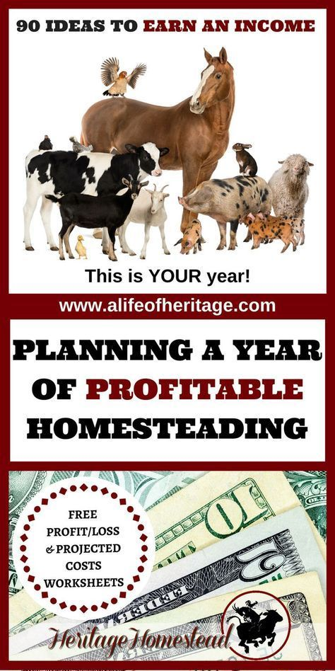 Planning Out a Profitable Homesteading Year Homesteads - free profit and loss worksheet