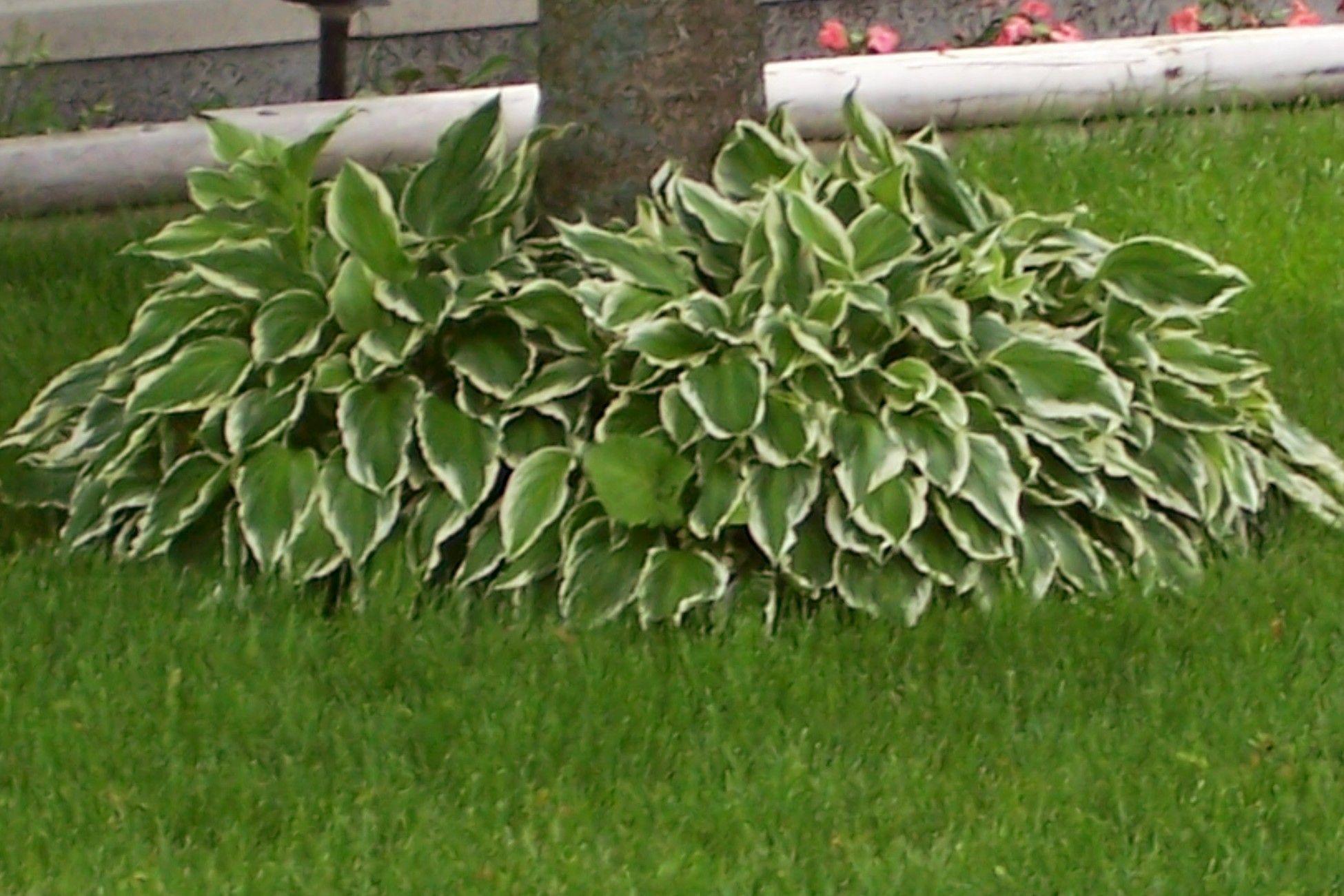 popular shrubs landscaping