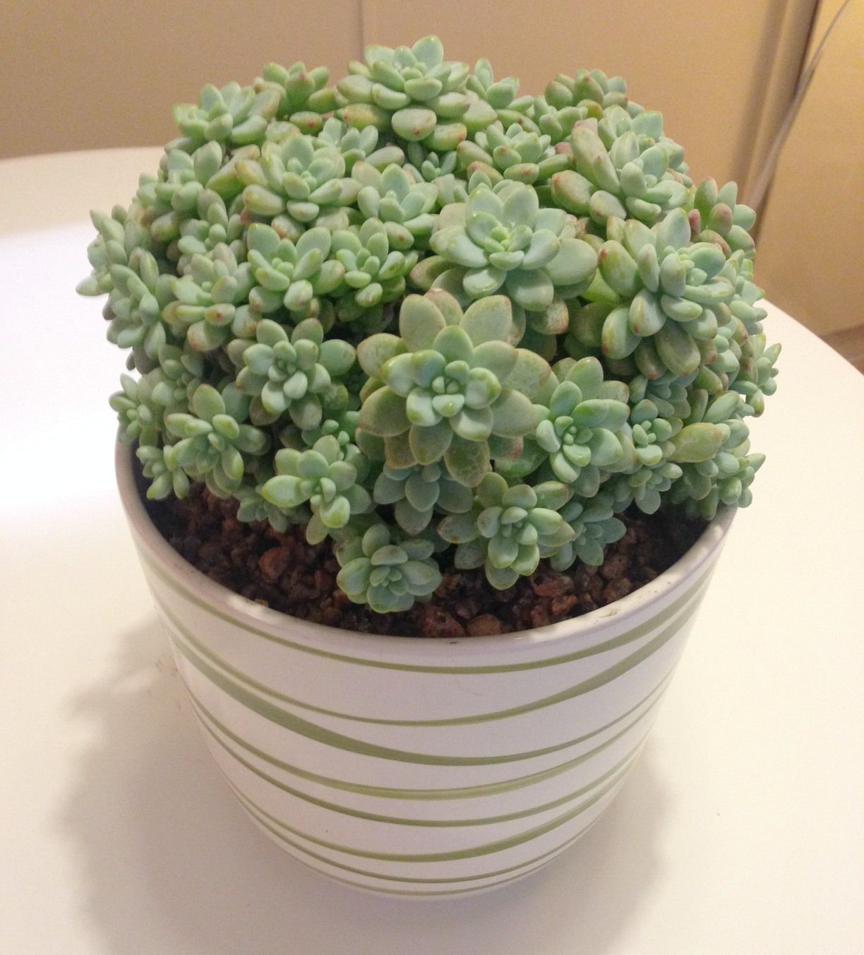 succulents can be planted in a pot without hole - Google Search
