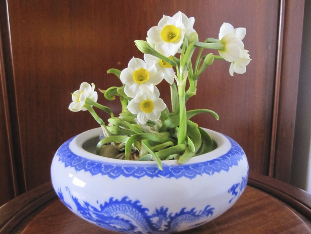 Chinese crab claw narcissus bulb carving how to slideshow