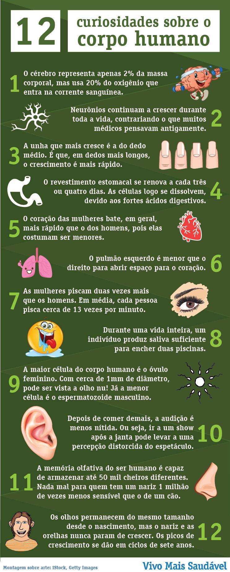 infográfico anatomia humana | enfermagem | Pinterest | Anatomía ...
