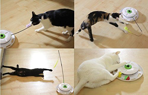 Review: WANTi Interactive Cat Toy | Cat toys, Interactive