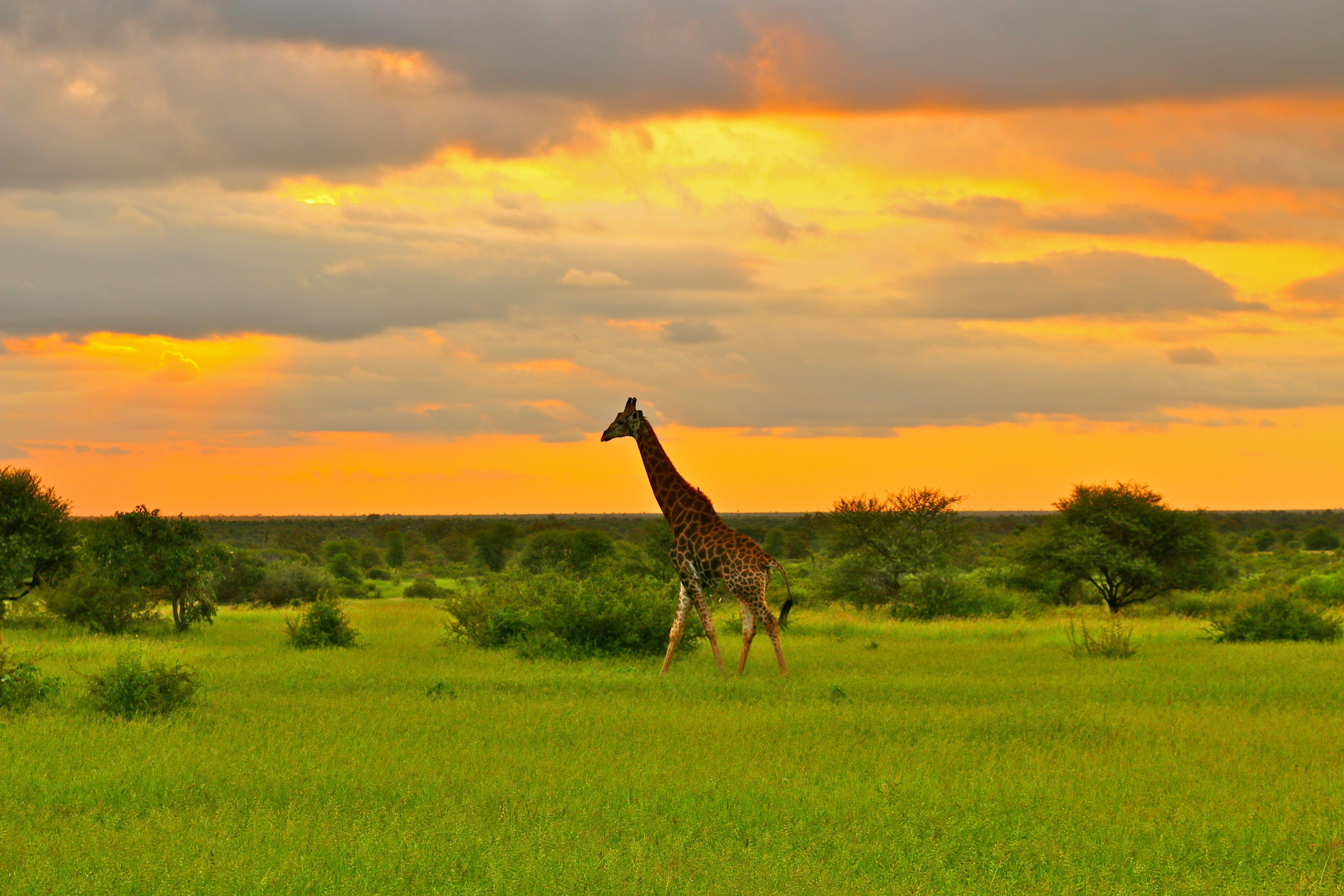 Kruger National Park South Africa Africa, Travel, Ideal