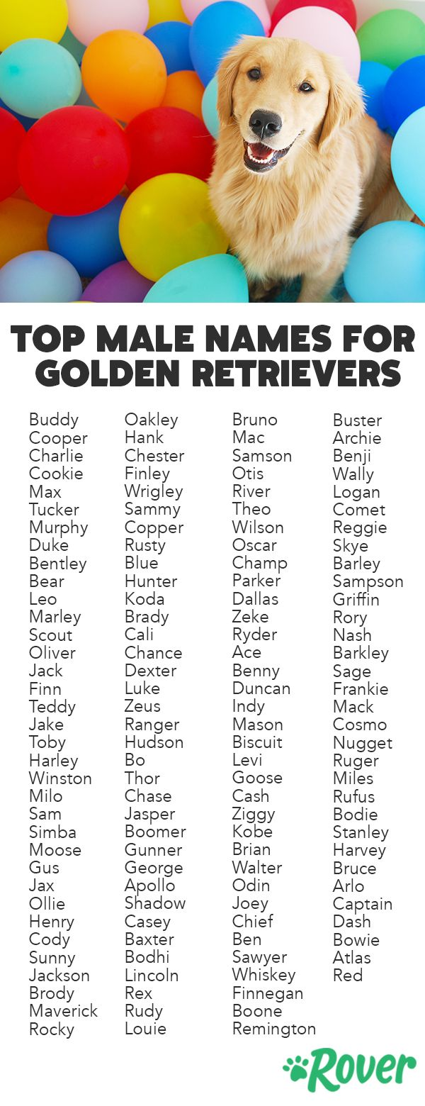 The 251 Most Popular Golden Retriever Names Of 2019 Golden Retriever Names Pet Names For Dogs Dog Names