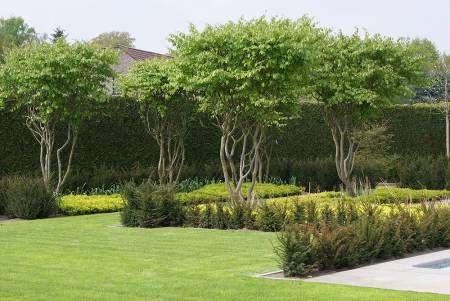 Meerstammige Bomen 21 Beplanting GARDEN Pinterest