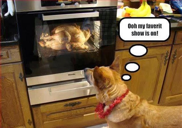 Favorite Show Is On Funny Thanksgiving Memes Funny Thanksgiving Pictures Thanksgiving Meme
