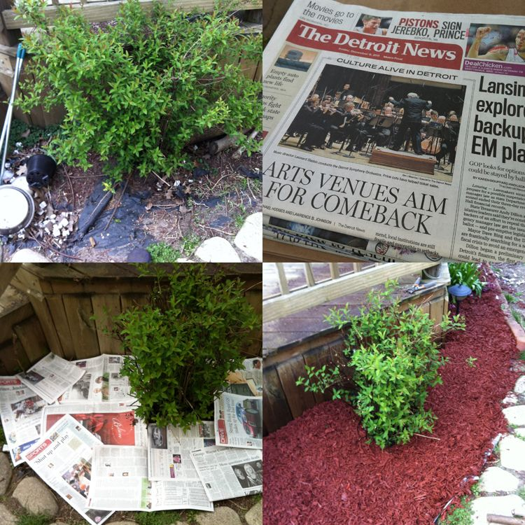Using newspapers to combat weeds