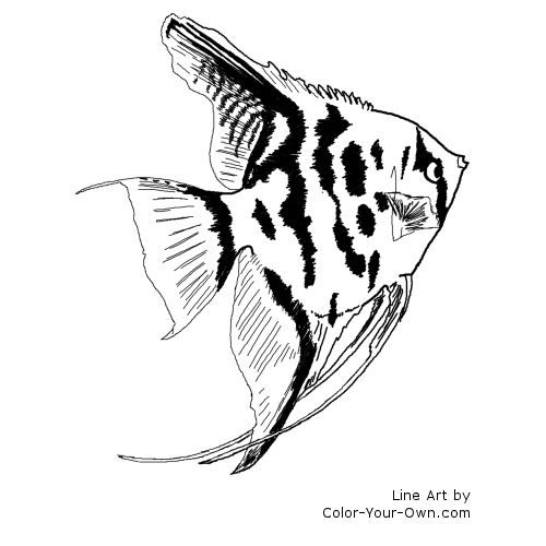 Freshwater Angelfish Coloring Page Fish Coloring Page Shark Coloring Pages Rainbow Fish Coloring Page