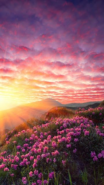 Sunrise And Pink Clouds Over A Field Of Pink Flowers Beautiful Landscapes Nature Photography Beautiful Nature