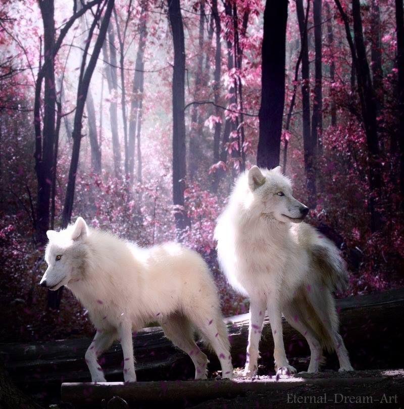 https://www.facebook.com/WolvesDragonsFairiesWitchesWizardsandFantasy/photos/a.510996815638199.1073741828.510993168971897/927904583947418/?type=3