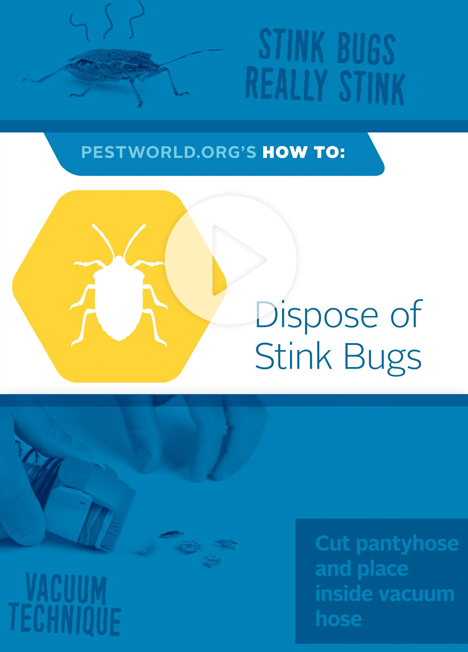 Be sure to properly dispose of stink bugs to avoid a