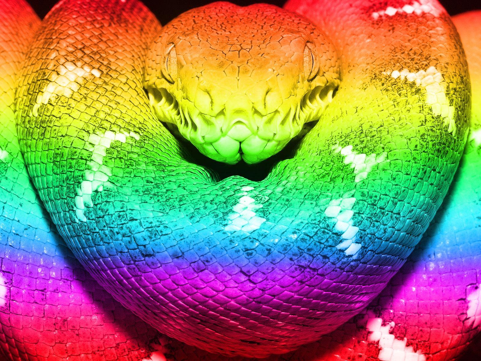 Rainbow Boa Color Rainbow Snake Wow With Images Rainbow Snake