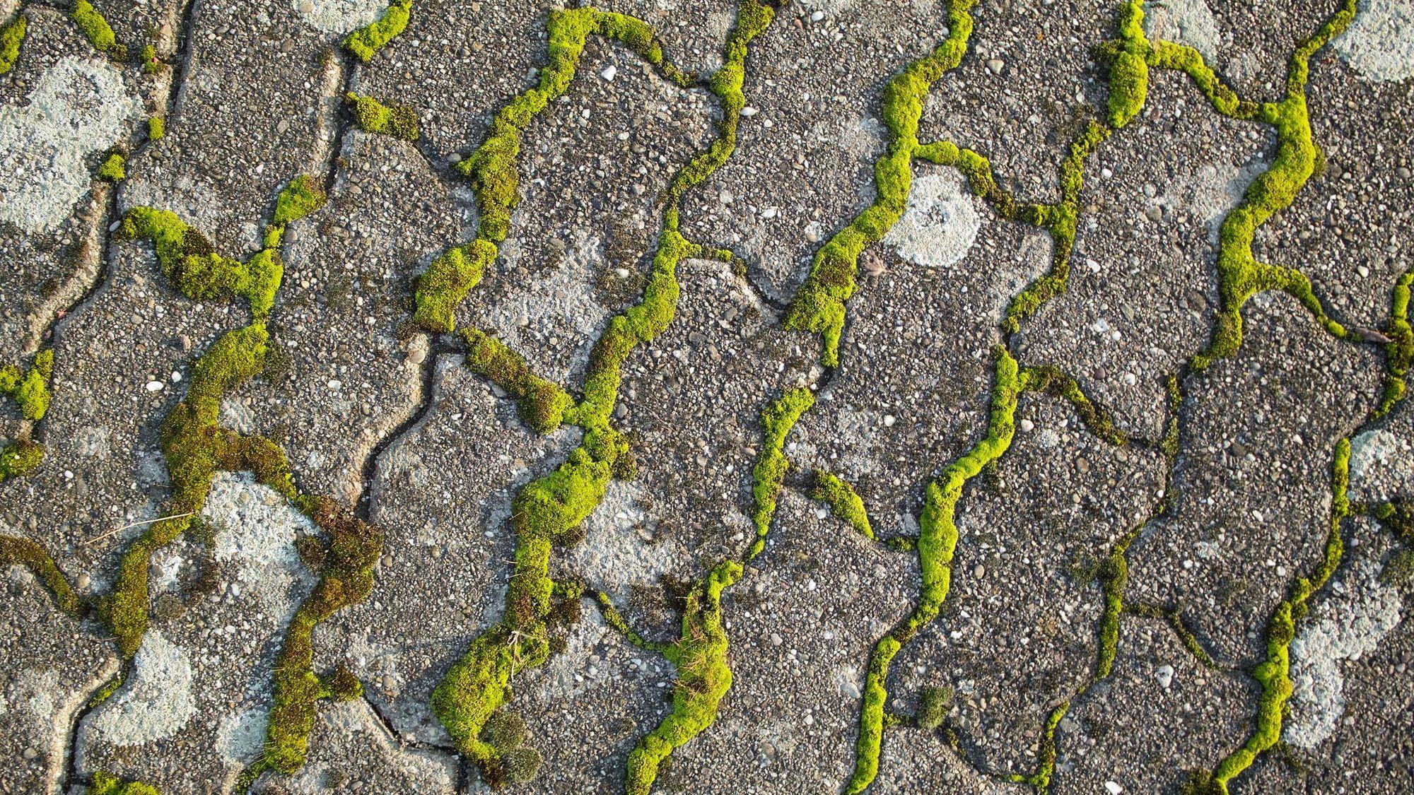 10 Solutions Pour Eliminer La Mousse Sur Une Terrasse Nettoyage Terrasse Desherbant Naturel