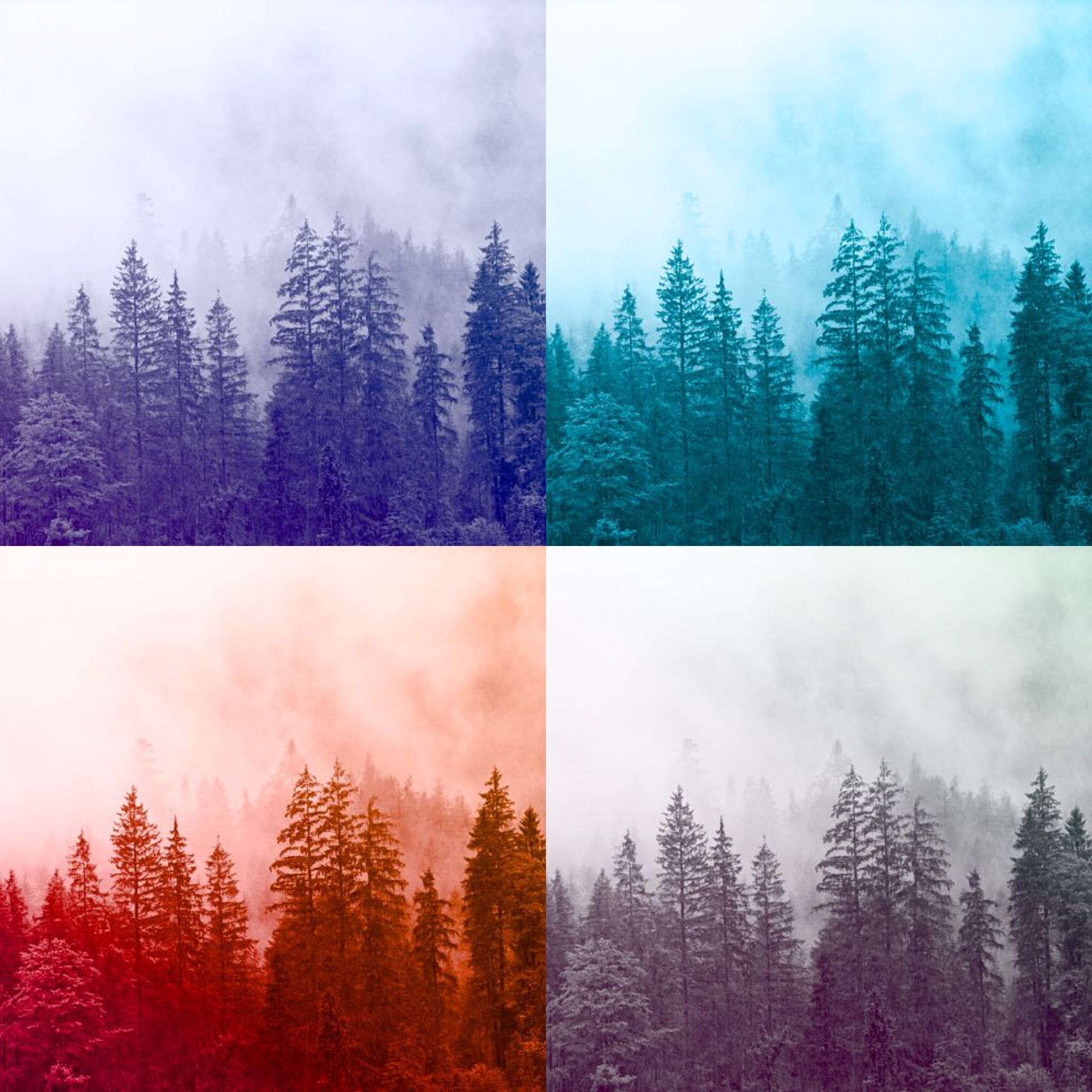 Add gradient to your photos with photo_styling_app