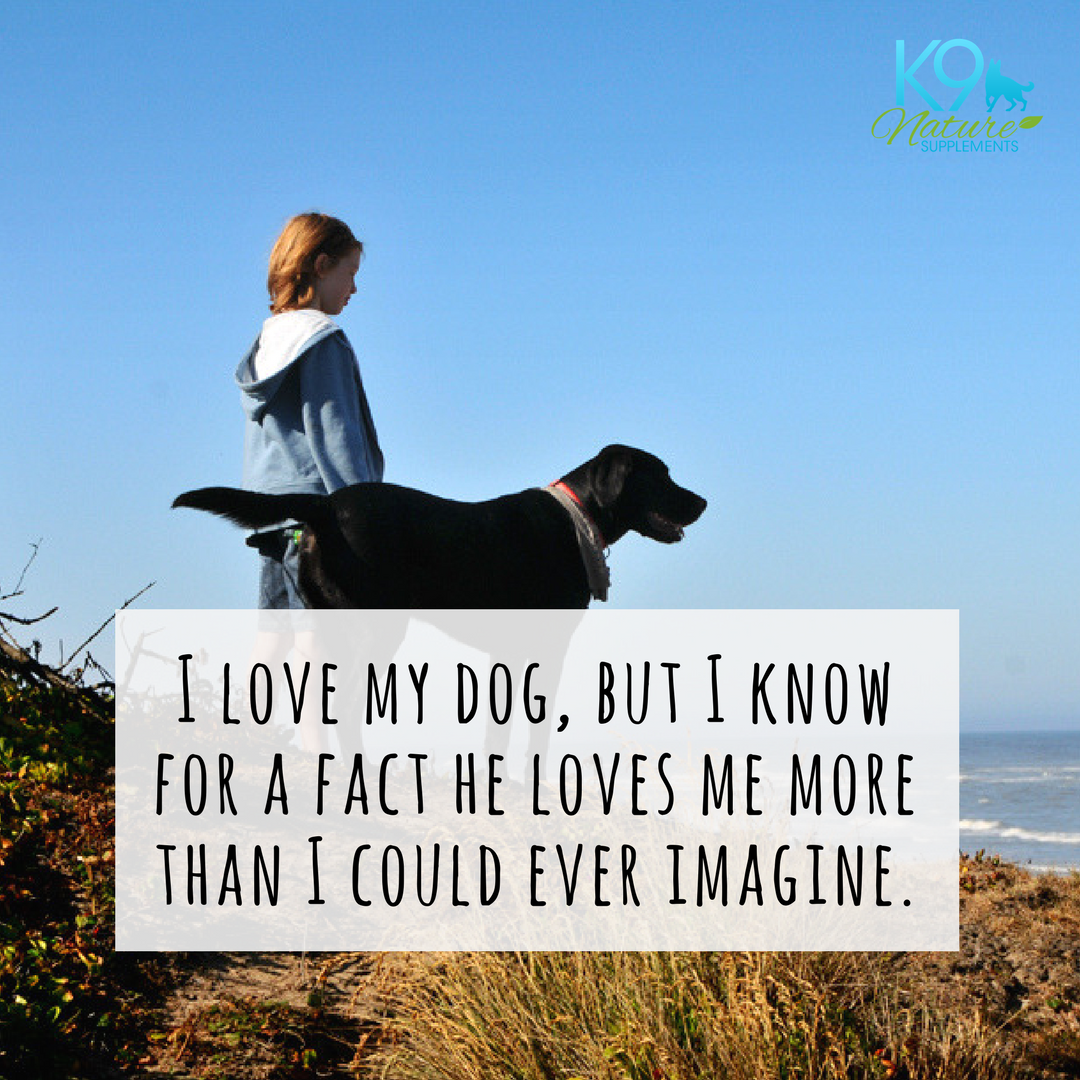 I Love My Dog Quotes Dog Quotes I Love My Dog But I Know He Loves Me More Than I Could
