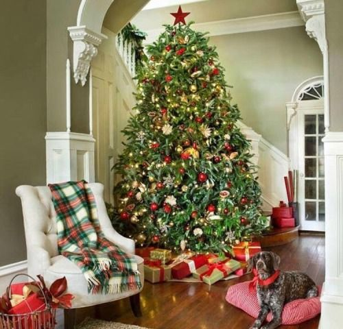 Patiently waiting for presents Source Southern Living Christmas - southern living christmas decorations